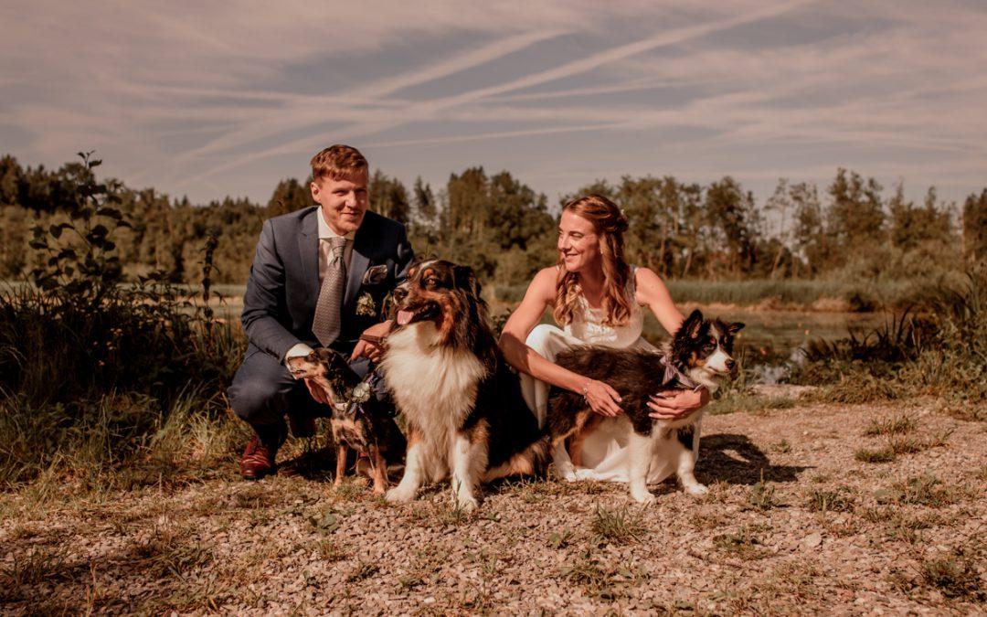 Hochzeitportraits Sabrina & Manuel mit Hunden